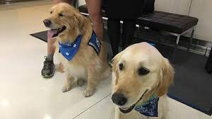 LCC K-9 Comfort Dogs help the grieving.